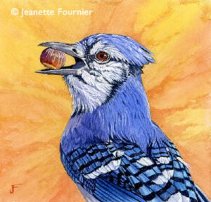 Blue Jay Finders Keepers WI